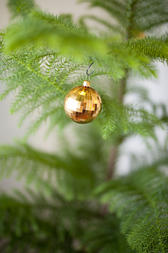 Traditional shiny golden bauble hanging on the branch of a pine Christmas tree